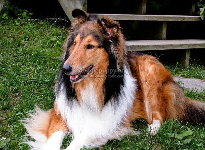 очаровательные преимущества собак средней породы