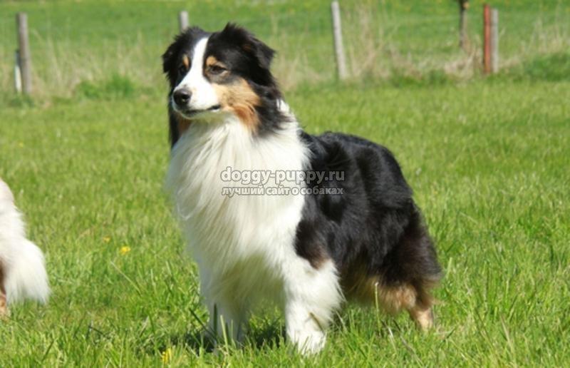средние собаки названия с фото