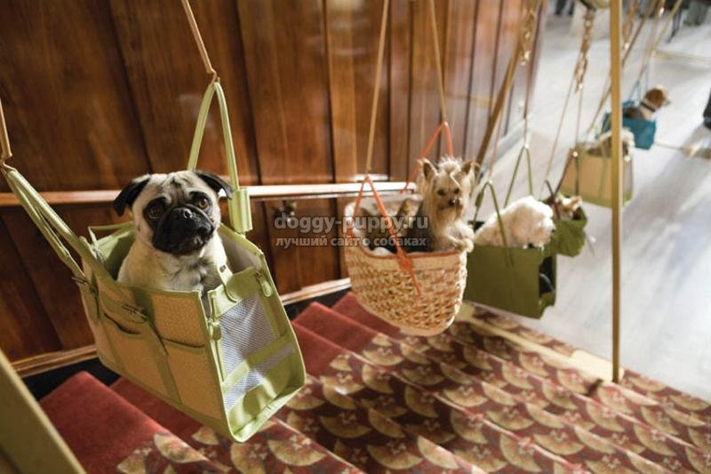 что нужно знать для путешествий с собакой