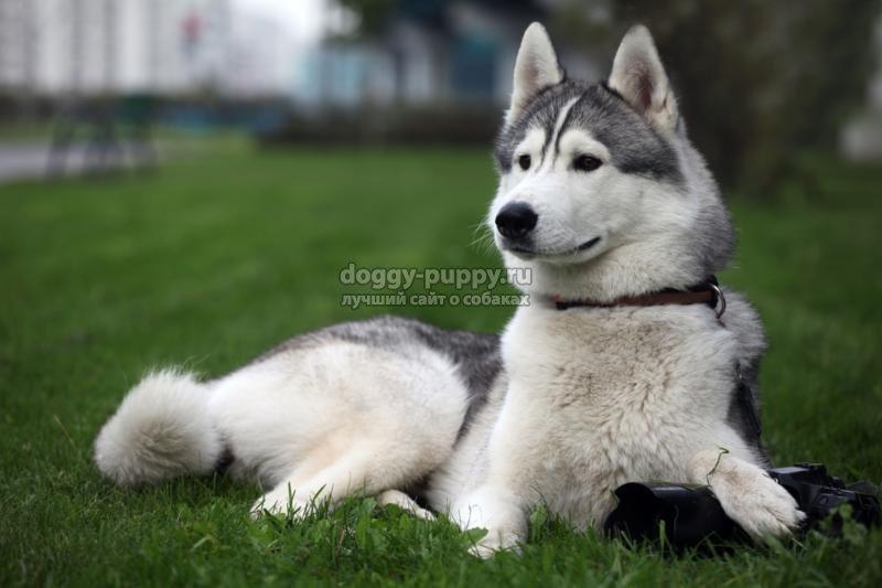 ТОП 10 самых известных в мире пород собак