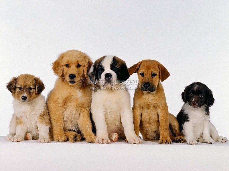 значение кличек собак
