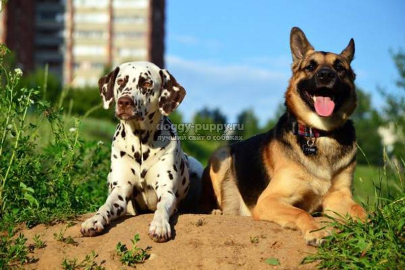 как дрессировать собаку: советы и фото