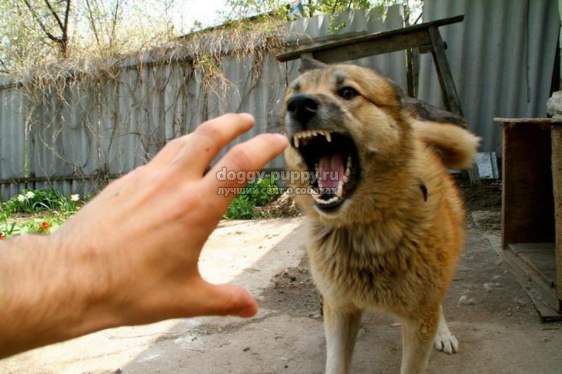 бешенство у собаки: симптомы и лечение