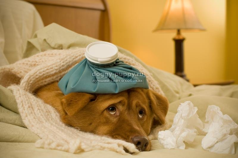отравление собак: симптомы и лечение