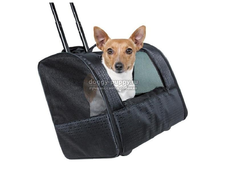сумки для собак мелких пород: как выбрать