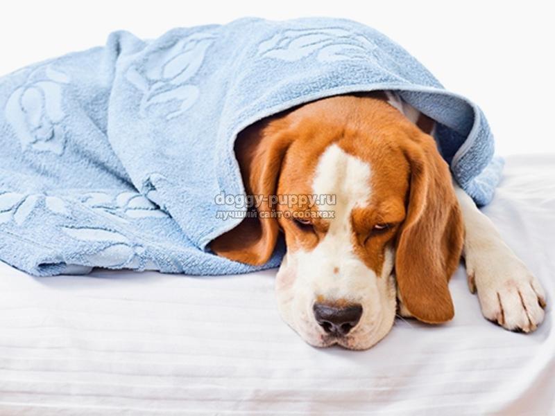 Собаку рвет: что делать и как лечить