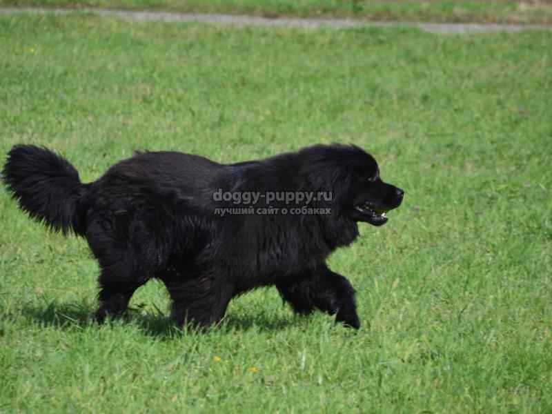 известные породы собак: ТОП-20 с фото