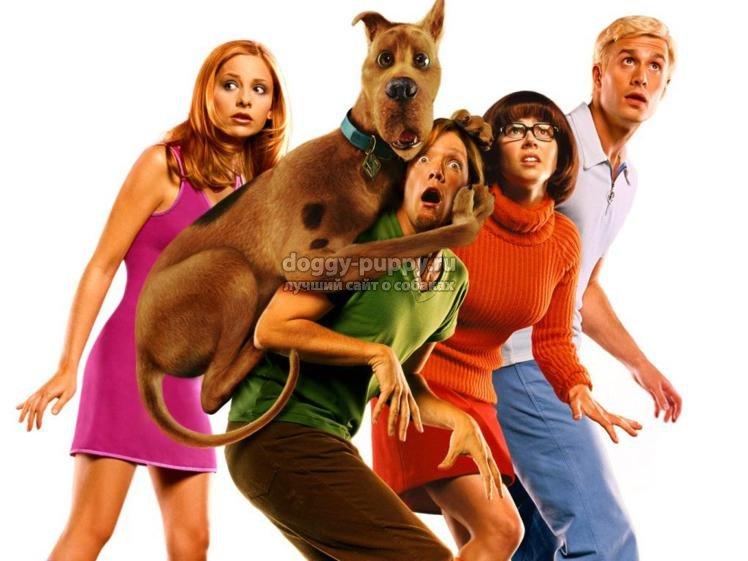 детские фильмы про собак: ТОП-10 самых популярных