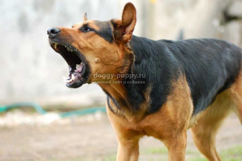 как отучить собаку лаять: полезные советы