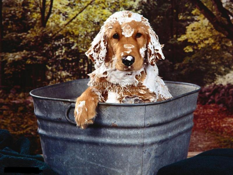можно ли мыть собаку мылом