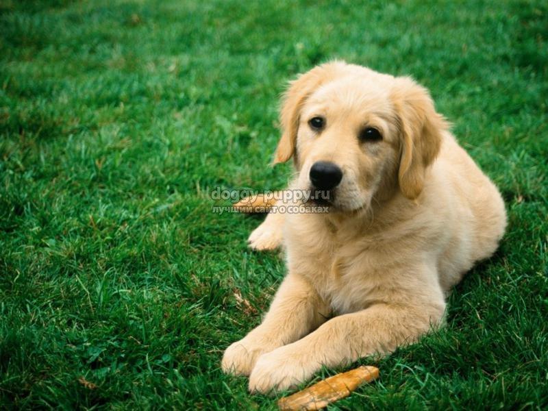 возраст собак: как определить
