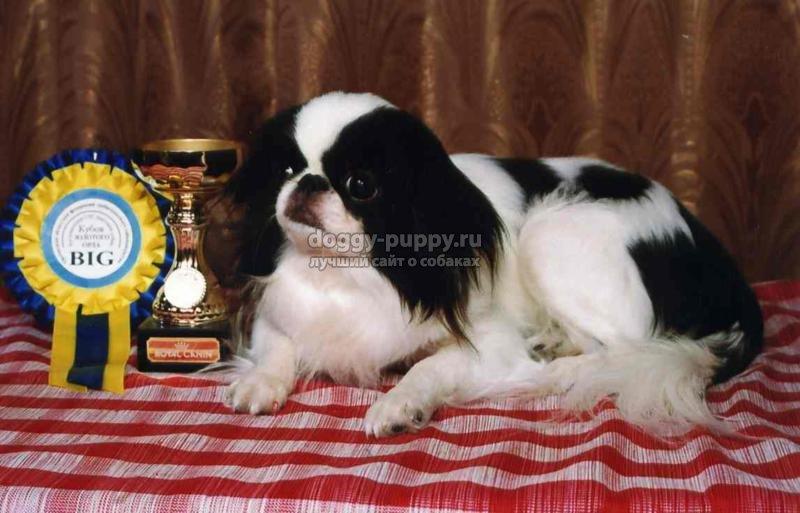 японские породы собак. ТОП-10 с фото