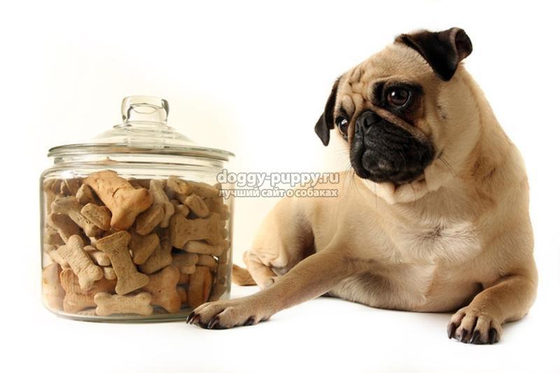 классы кормов для собак список и рейтинг