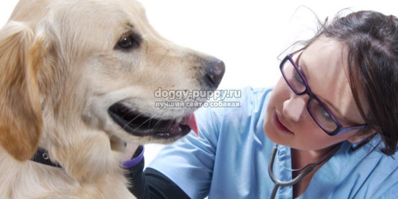 рак у собак: симптомы, фото и лечение