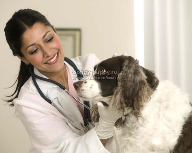 энтерит у собак: симптомы и лечение