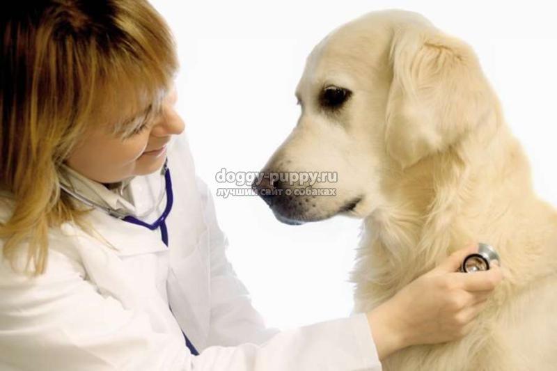 кашель у собаки: причины, виды, лечение