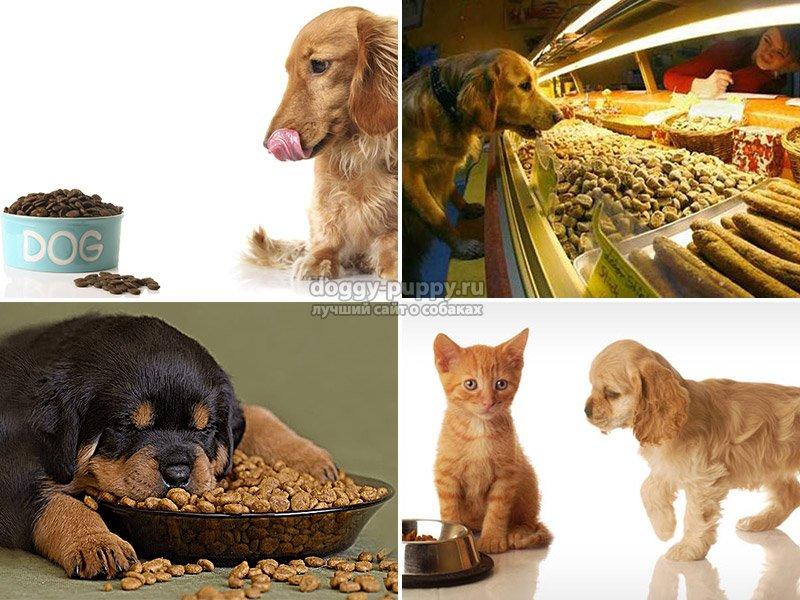 Корм для собак премиум класс