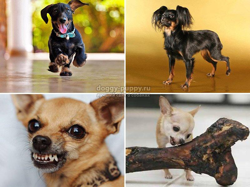 Корм для мелких собак