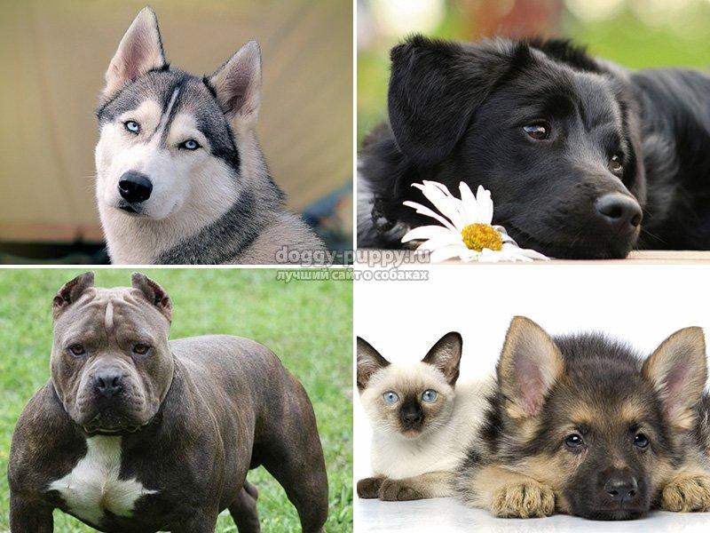 Сколько живут собаки