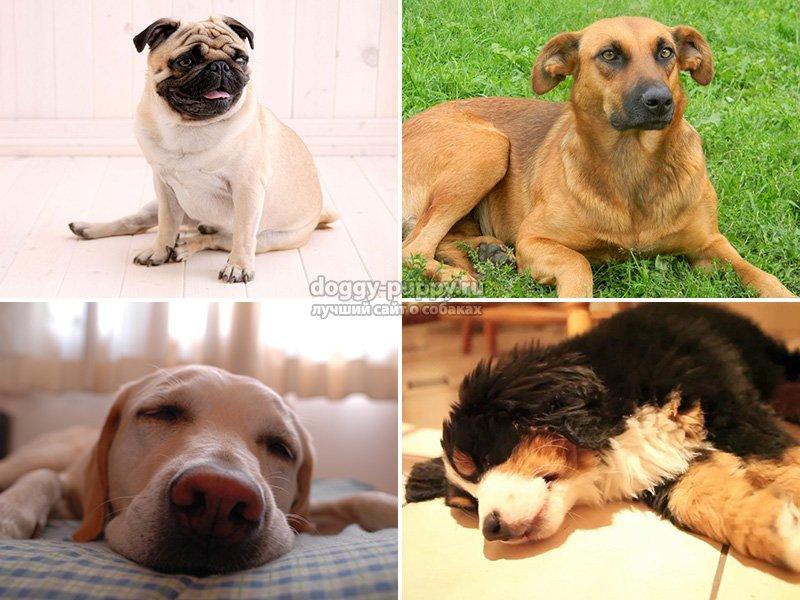 К чему снится собака
