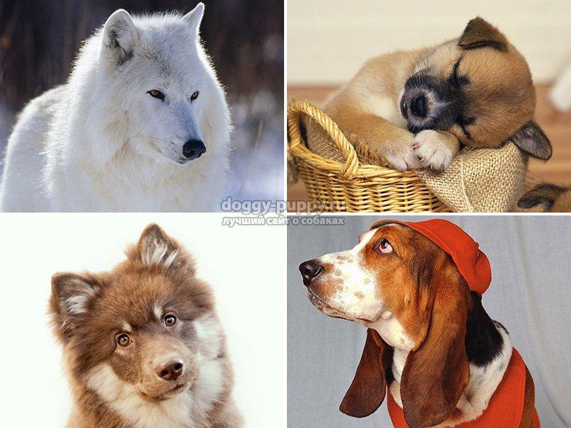 Почему нельзя держать дома собаку