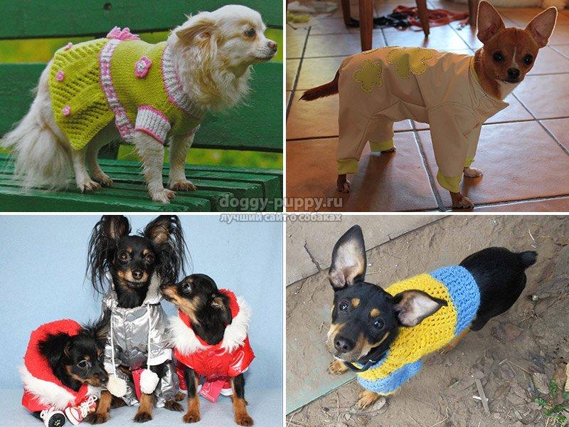 Ведь собака без труда может эту одежду испачкать, сколько на нее колечек и ожерелий не цепляй и духами ни прыскай. Собака все равно останется собакой, может забежать в лужу, может где-то найти пятно машинного масла и там изваляться, может подраться с другой собакой и просто эту одежду порвать, в общем, вариантов уничтожения одежек может быть много. Дальше, магазины бывают физические - это те магазины, которые существуют и в них нужно специально ехать, а бывают магазины виртуальные, то есть интернет-магазины, где вы можете заказать для своего питомца одежду, и она через некоторое время к вам придет по почте. У этих магазинов существуют свои плюсы и свои минусы. Например, в обычном магазине вы можете выбрать для своего питомца одежду по размеру, и она не будет сидеть на собаке, как на корове седло. В интернет-магазинах такой возможности у вас не будет и неизвестно, как будет смотреться одежда, присланная вам по почте, на вашем питомце, но зато если костюмчик подойдет, он будет стоить гораздо меньше, чем в обычных магазинах. Все знают, что интернет-магазины сейчас гораздо дешевле, чем обычные магазины, и это касается не только бытовой техники.