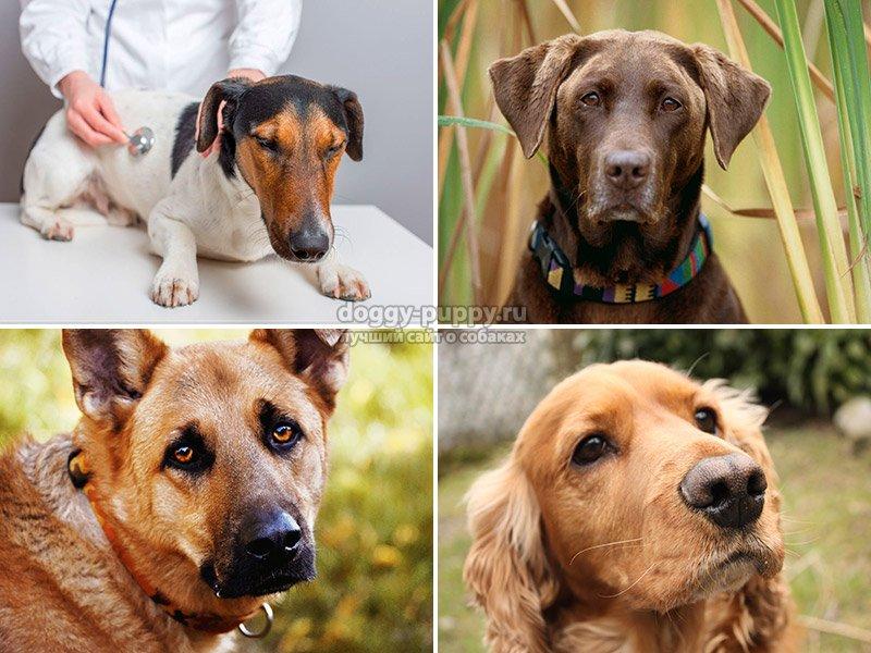 Зуд у собак: лечение и причины