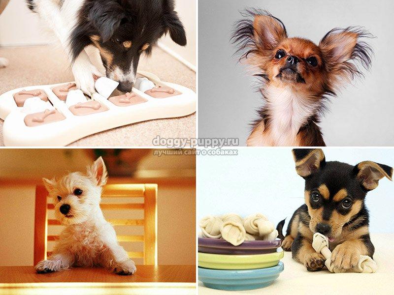 Корм для мелких пород собак