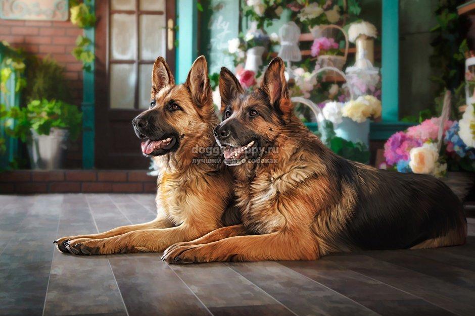 сторожевые собаки воспитание