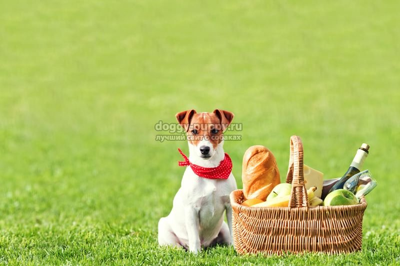 пикник с домашней собакой