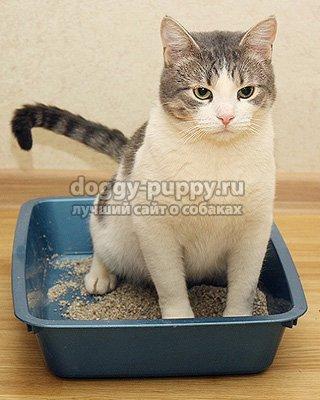 приучить кошку к туалету