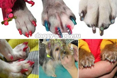 салон красоты для собак