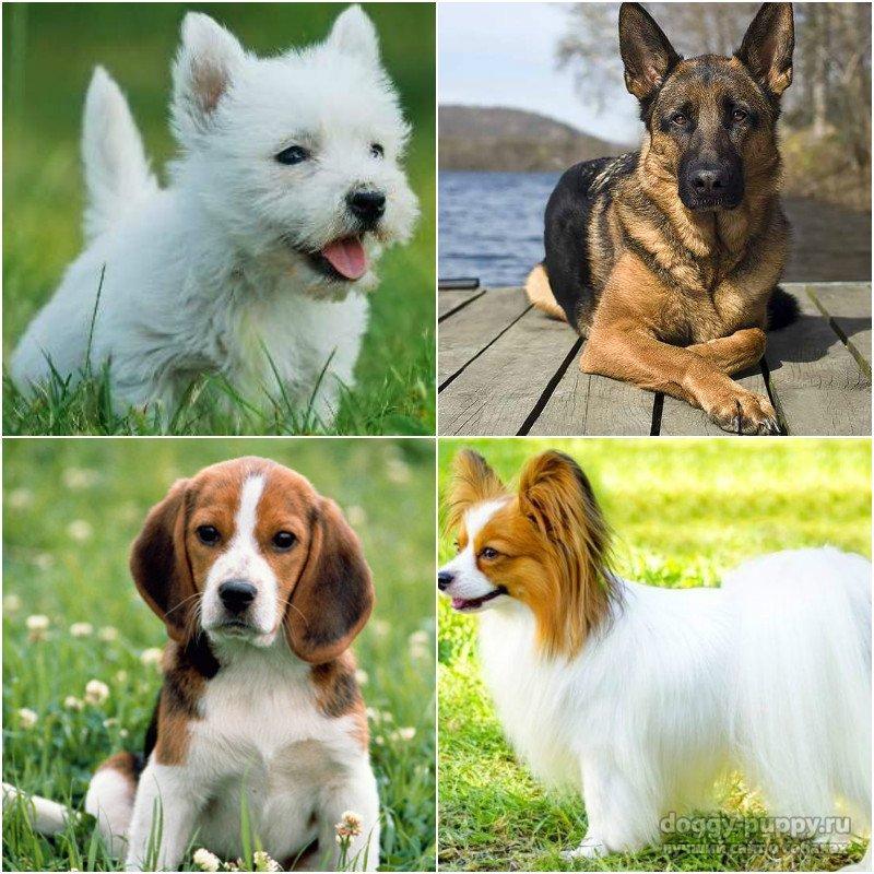 Клички для собак девочек крупных пород