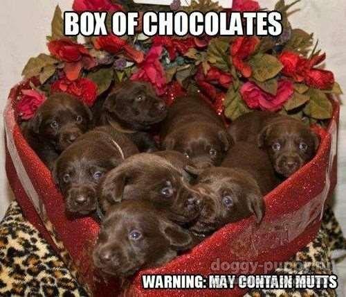 Смешные фото щенков лабрадора