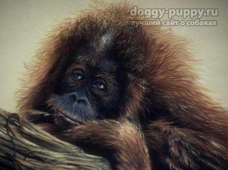 обезьянка фото