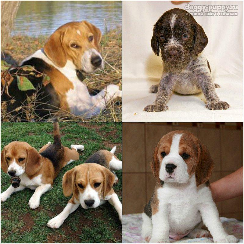 Клички собак кобелей по буквам и их значение