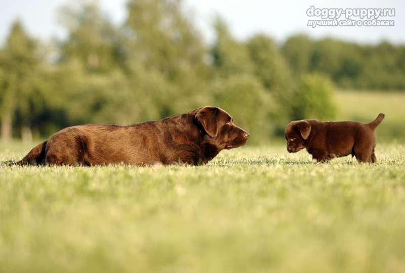 щенки и собаки
