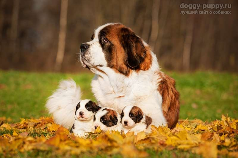 щенки и мамы