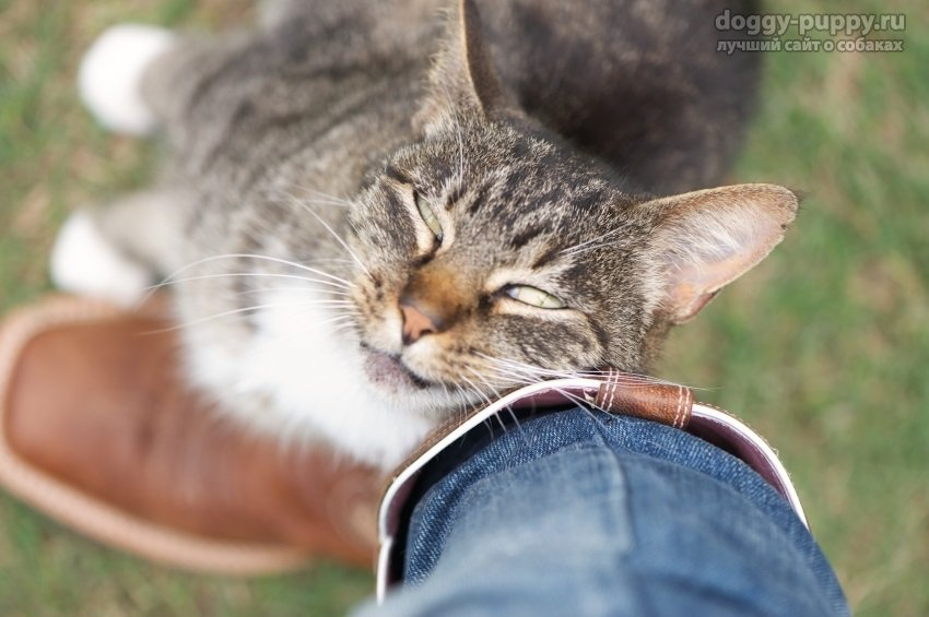 кошки путаются под ногами