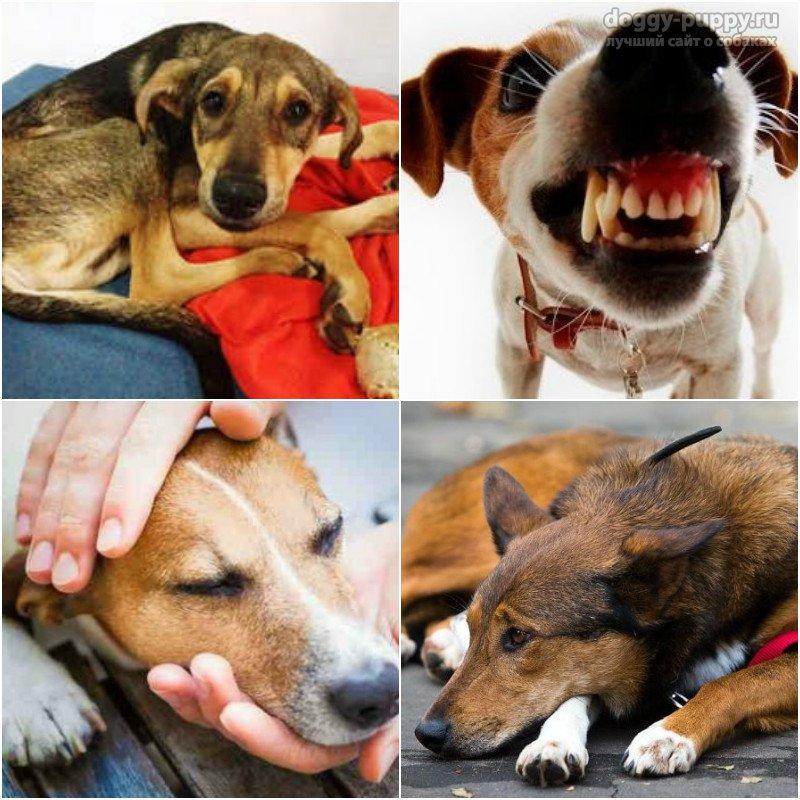 Чумка у собак: симптомы и лечение в домашних условиях. Заразна ли?