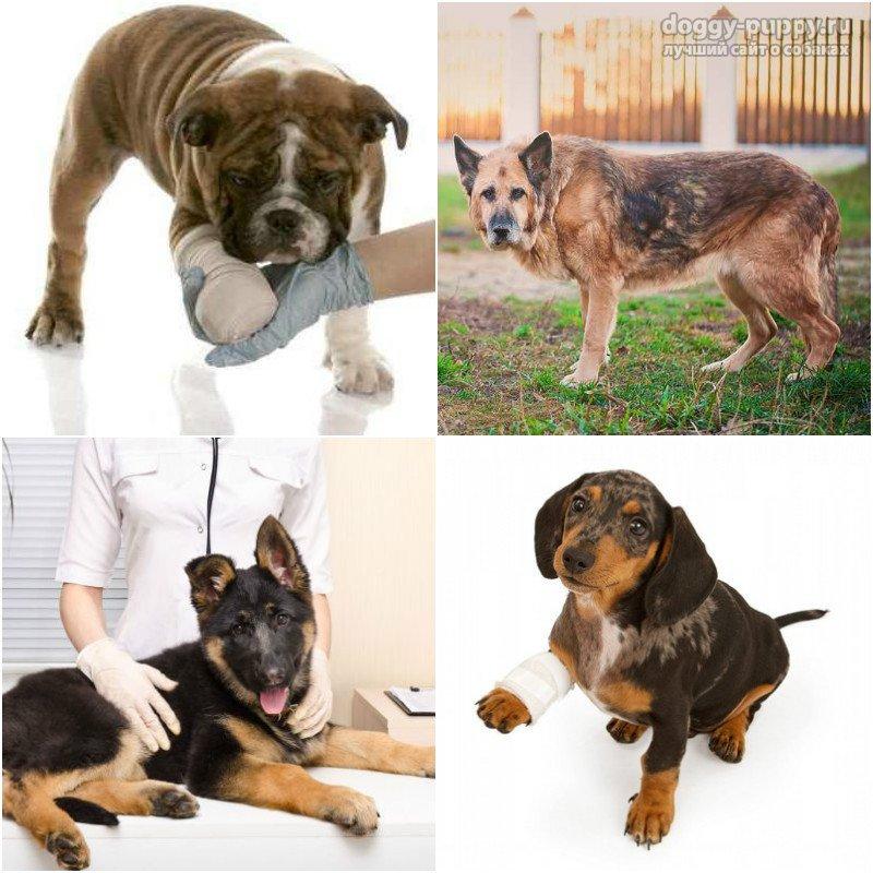 Если у собаки водолаза бо лят суставы зажат нерв в голеностопном суставе