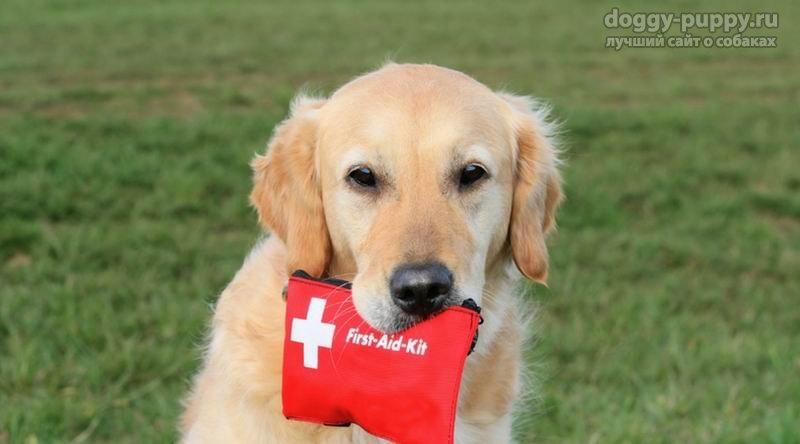 Лекарства в домашней аптечке для собаки: список самого необходимого