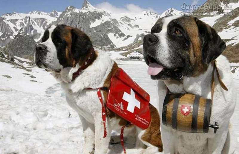 аптечка для домашних животных