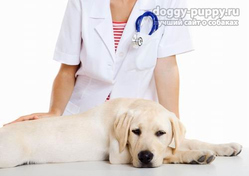 Самые распространенные признаки глистов у собак