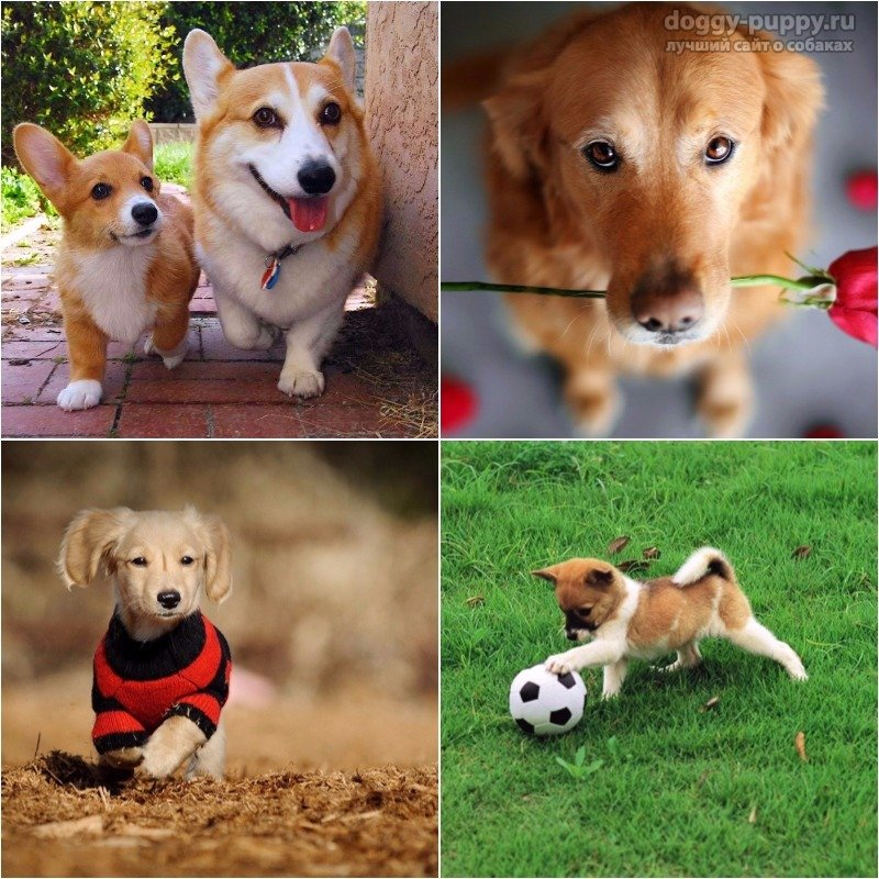 10 причин завести собаку