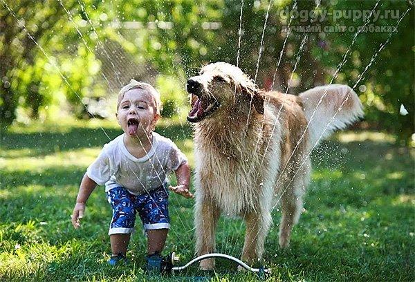 Собака - лучший друг ребенка