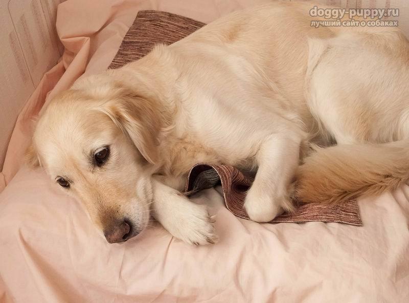 Заболевания матки собак