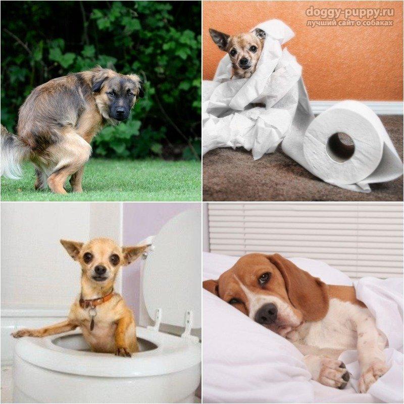 У собаки понос - что делать? Как лечить понос у собаки в домашних условиях?