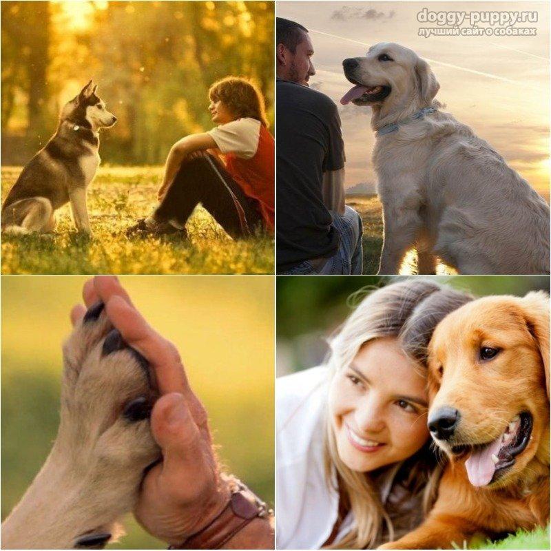 Верны ли собаки или можно ли назвать собаку верным другом