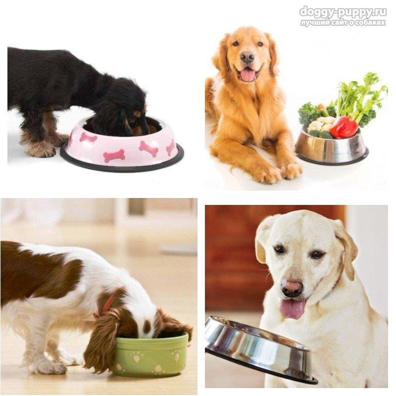 Каша для собак. Можно ли давать? Как варить и какую?